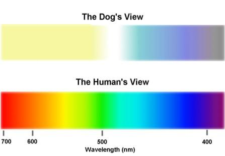 dog V human colour spectrum vision range