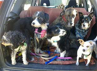 Happy dog pack on the way to a walk