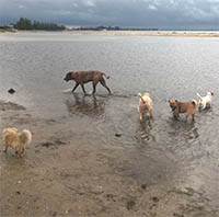 dogs enjoyng off lead time