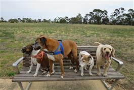four friendly dogs on a park bench