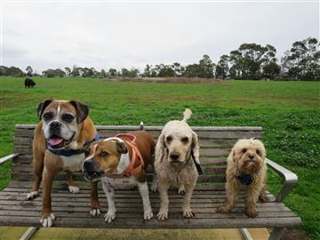 a fine dog pack for off lead dog walks