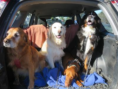 dog park tips dogs in car