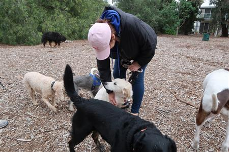 lovely-melbourne-dog-parks