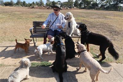 Social-dogs-in-an-off-lead-dog-park