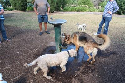Social-dogs-off-lead-dog-park