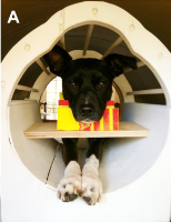 dog in an mri scanner