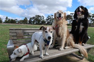 Pet-Sitter-dogs